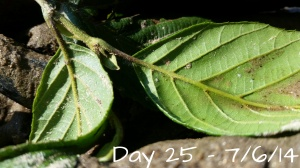 Day 25