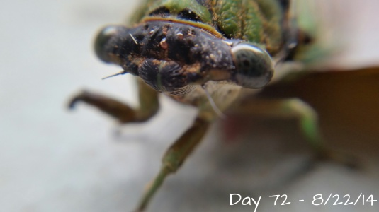 Day 72