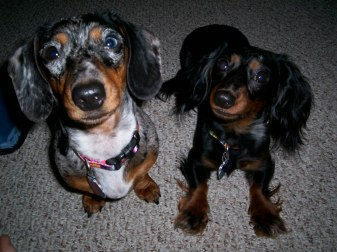 2003 Molly & Winnie